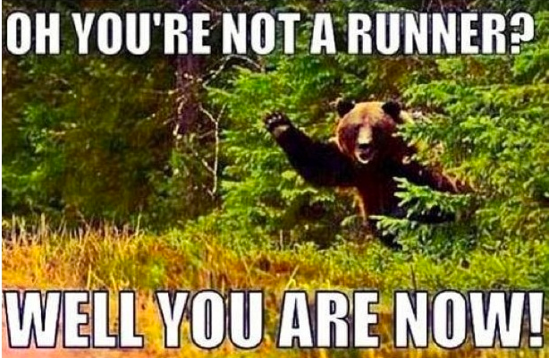 Isn't it a bad idea to run from bears?